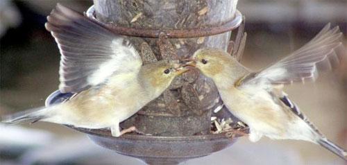 Las aves y el amor
